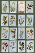Collectable  Cigarette cards set Plants of Commercial Value 1917,